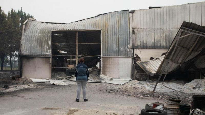 Parque de campismo e empresa consumidos pelas chamas em Vieira de Leiria