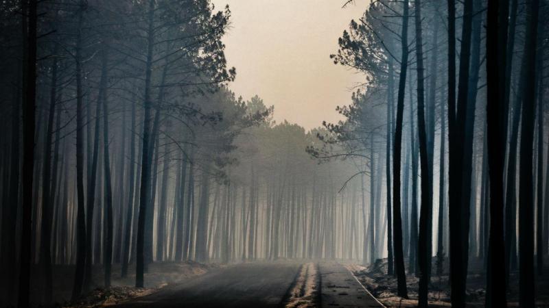 Incêndio no pinhal de Leiria
