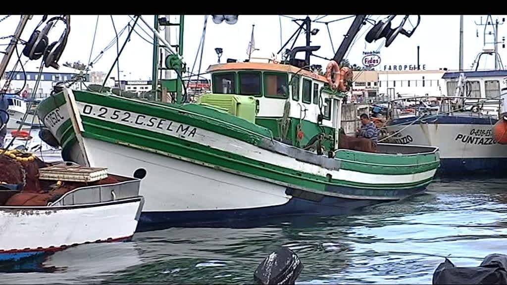 Pesca da sardinha vai ter de diminuir