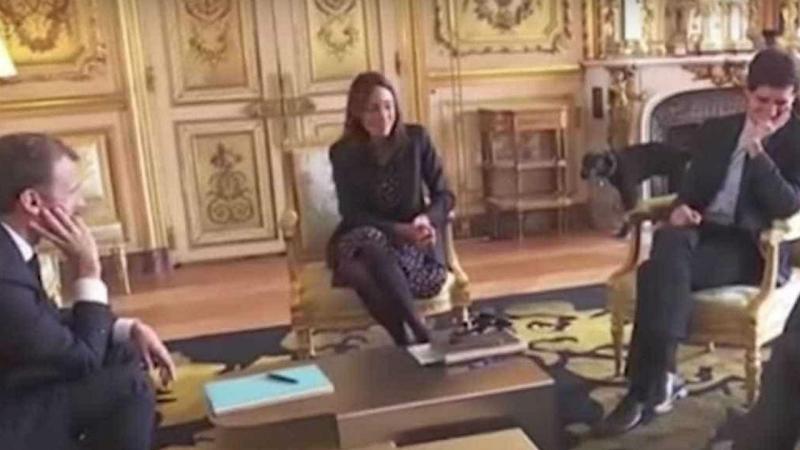 Cão de Macron protagoniza momento insólito no Eliseu
