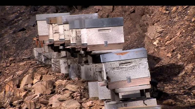 Depois dos fogos, apicultores pedem açúcar para alimentar as abelhas