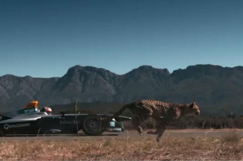 Fórmula E desafiou uma chita na África do Sul