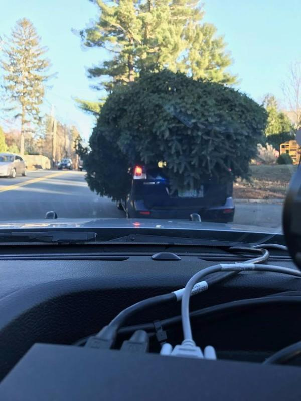 Norte-americano levou árvore gigante em cima de um carro