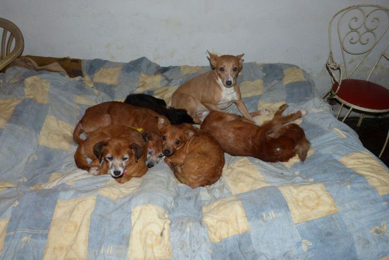Cães recolhidos em Câmara de Lobos