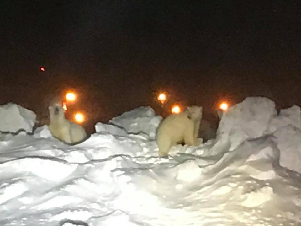 Ursos no Aeroporto do Alasca
