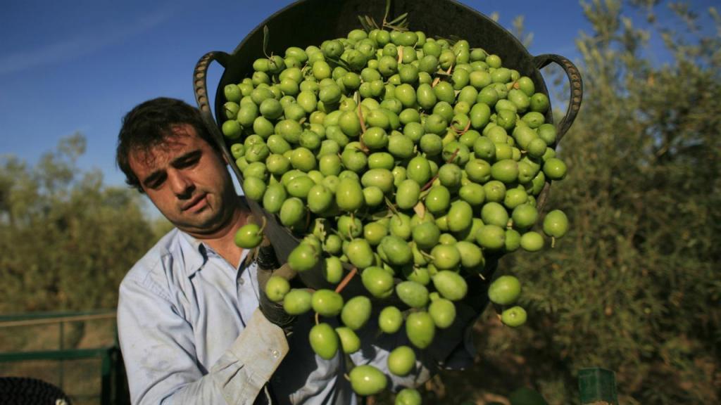 Espanha - olival (arquivo)