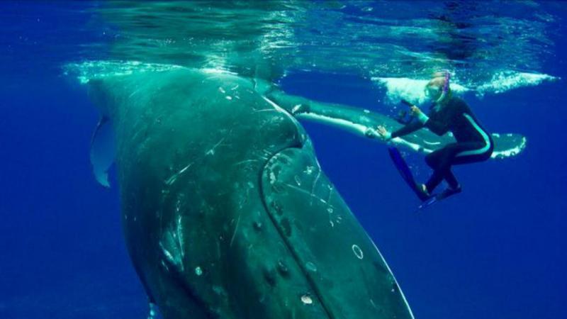 Bióloga acredita que foi salva pela baleia