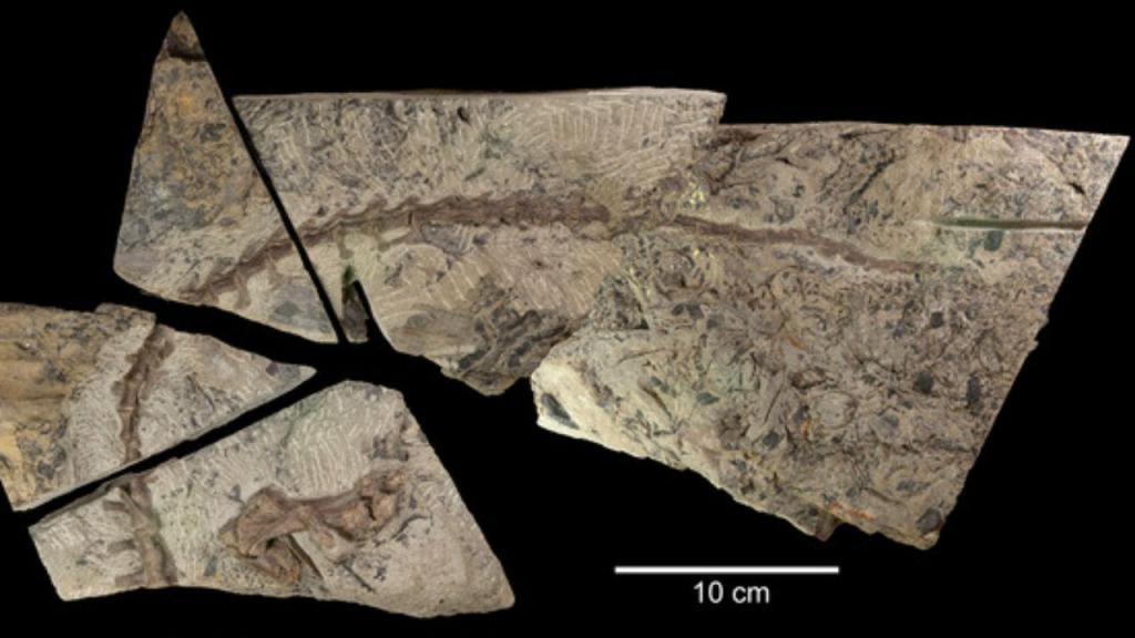 Encontrados vestígios de nova espécie de dinossauro