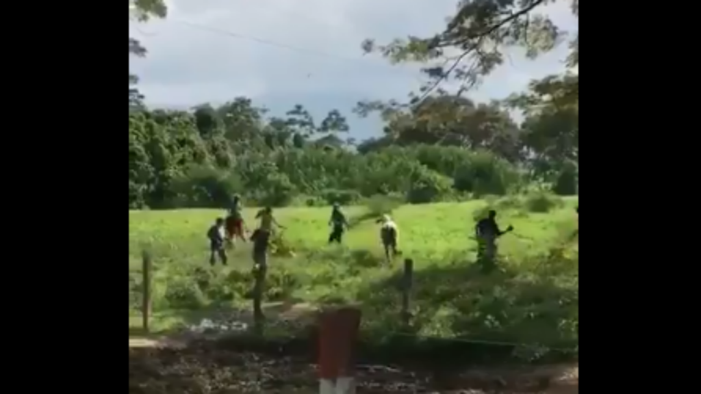 Fome na Venezuela. Vaca morta à pedrada
