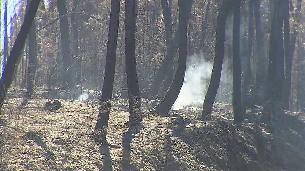 Limpeza de florestas: câmaras dizem que é impossível cumprir prazos