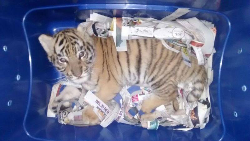 Cria de dois meses encontrada numa caixa de plástico num posto de correios no México.