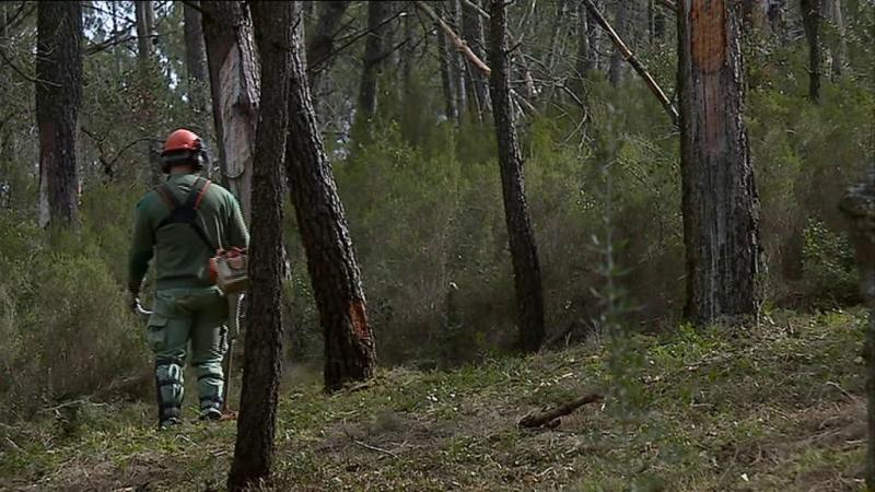 Porto de Mós não tem recursos para limpar matos dentro do prazo