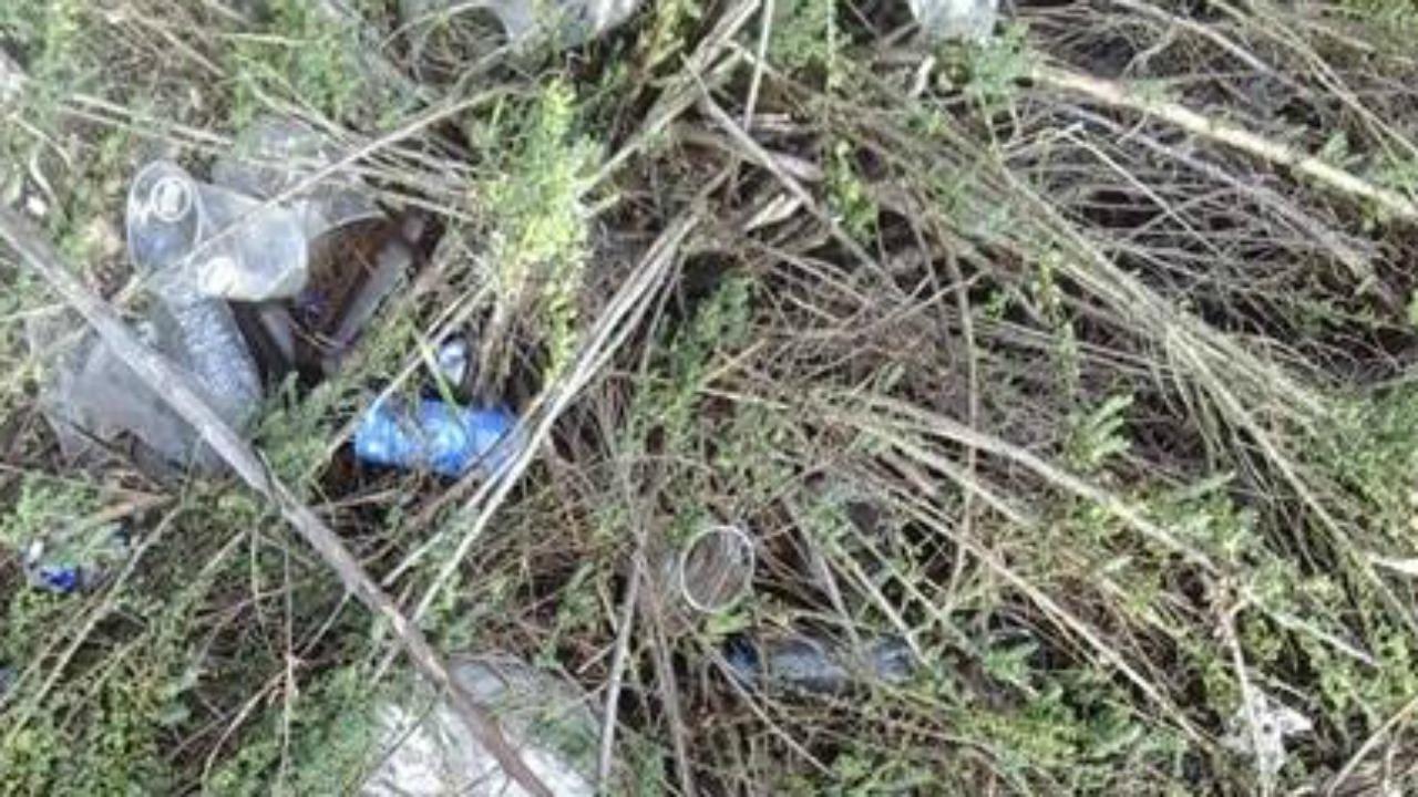 Poluição na Ria Formosa