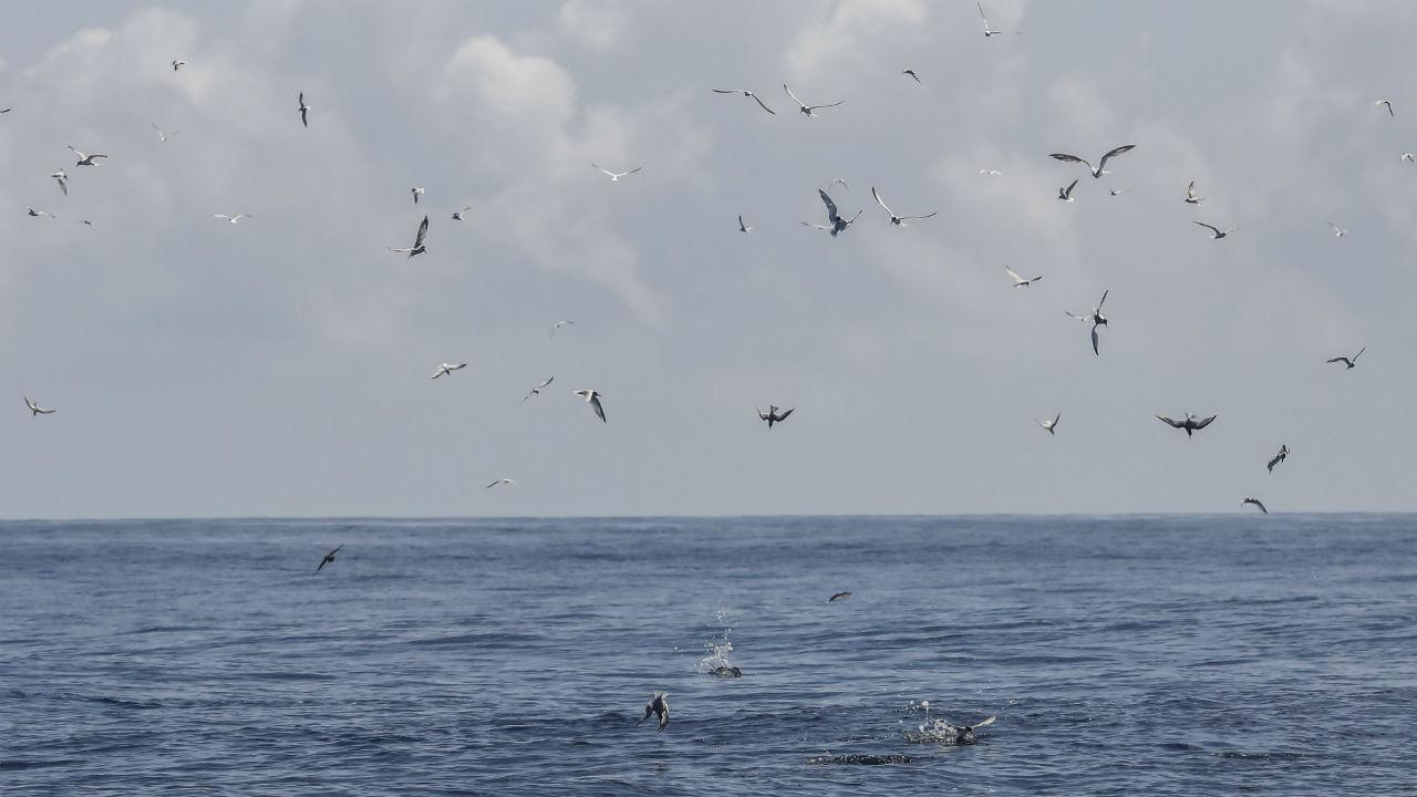 6f587415e5 Barco de pesca à deriva em Caminha já está a ser rebocado | TVI24
