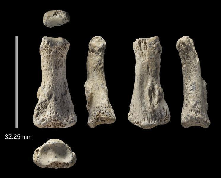 Dedo de Homo Sapiens