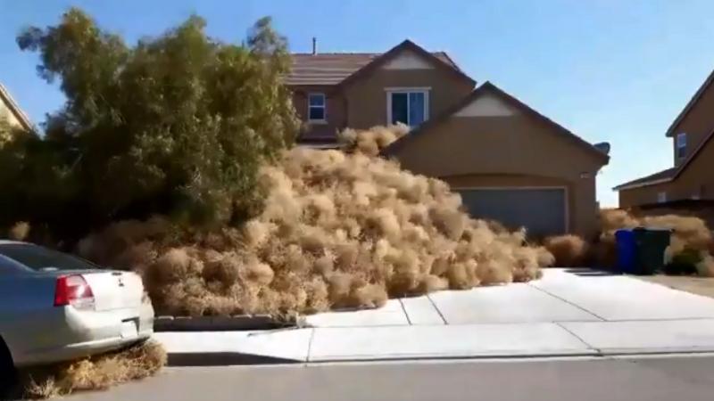 Bolas de pêlo terão afetado entre 100 a 150 habitações