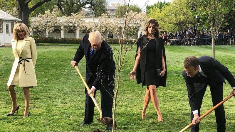 Trump e Macron plantaram a árvore juntos na semana passada