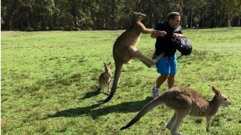 Cangurus atacam turistas