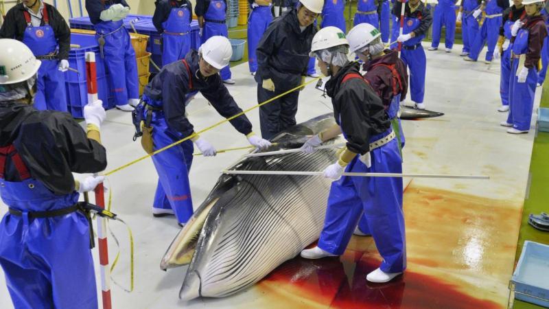 Baleias mortas no Japão