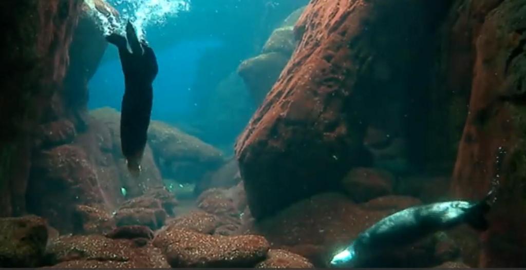 Lontras-marinhas