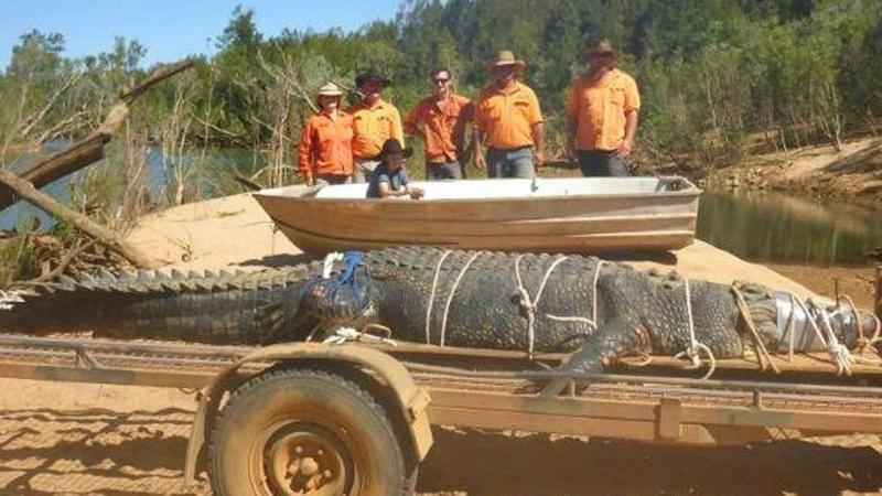 Crocodilo gigante capturado