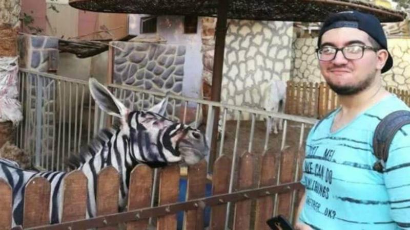 Zoológico no Egito pinta burro para passar por zebra