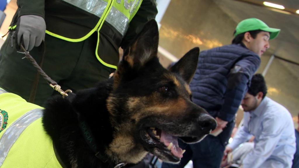 Sombra é cadela-polícia na Colômbia e já farejou mais de nove toneladas de droga. Agora é procurada pelo principal cartel do país