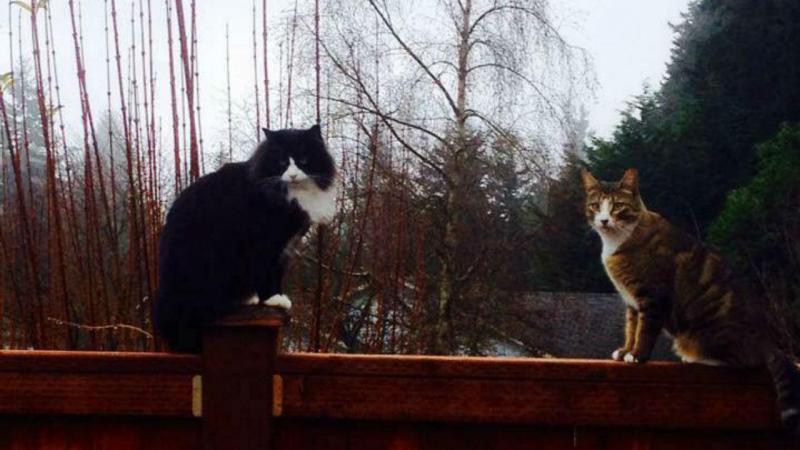 Tarot, à esquerda na fotografia