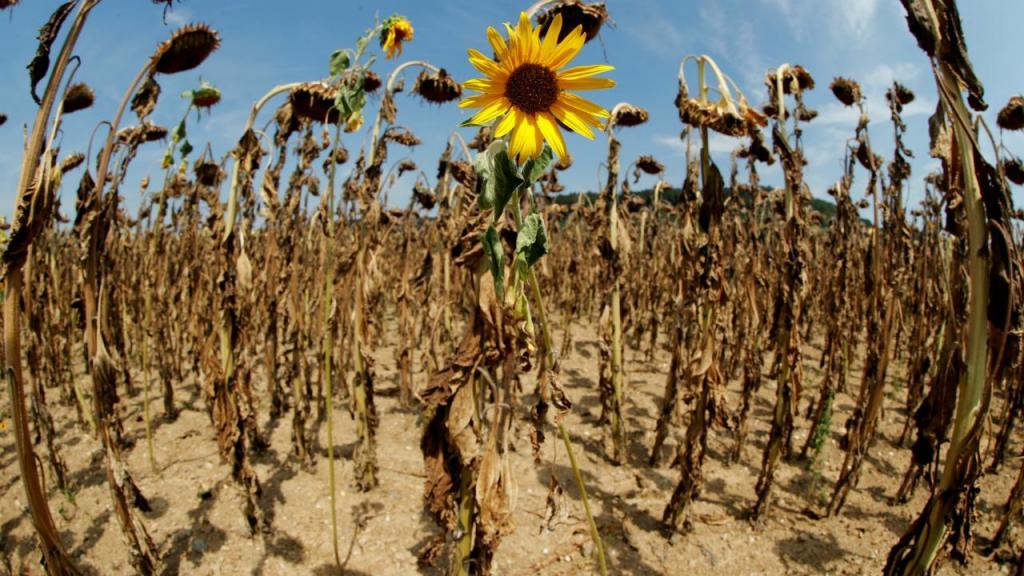 Efeitos da vaga de calor em vários países na Europa