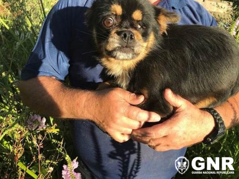 GNR resgata cão de poço