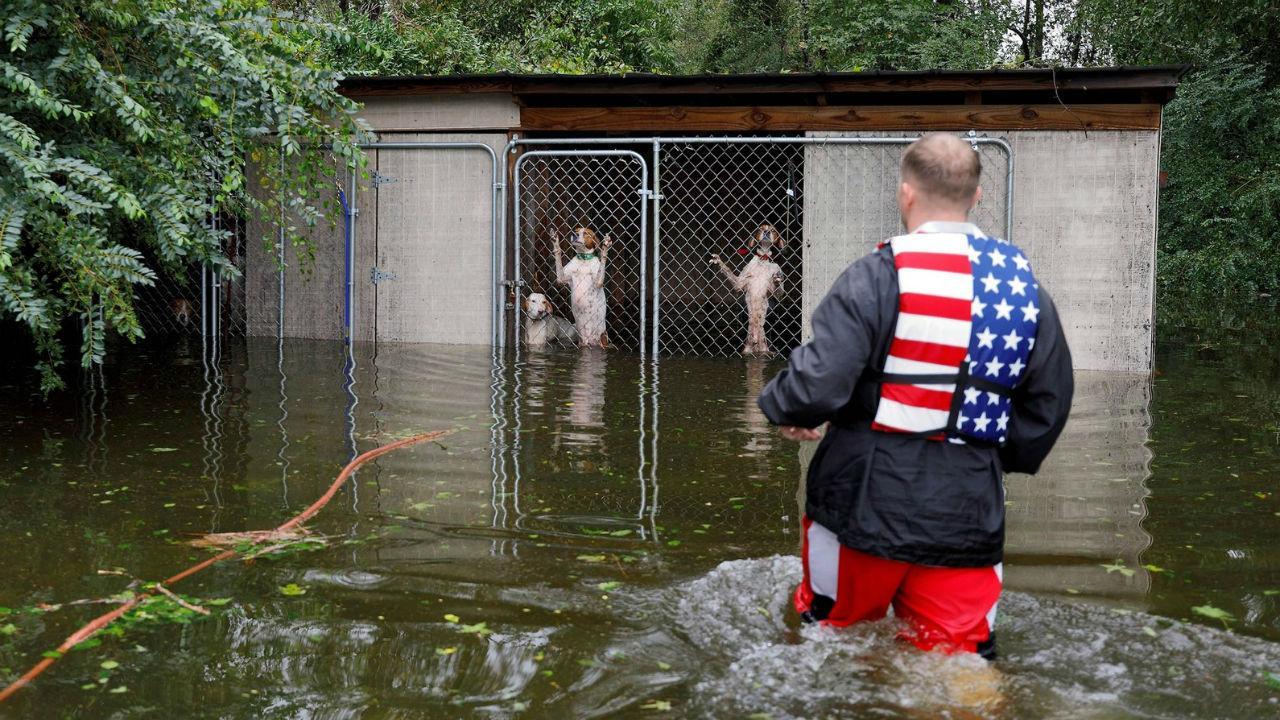 Socorrista salva cães encurralados pelo furacão Florence