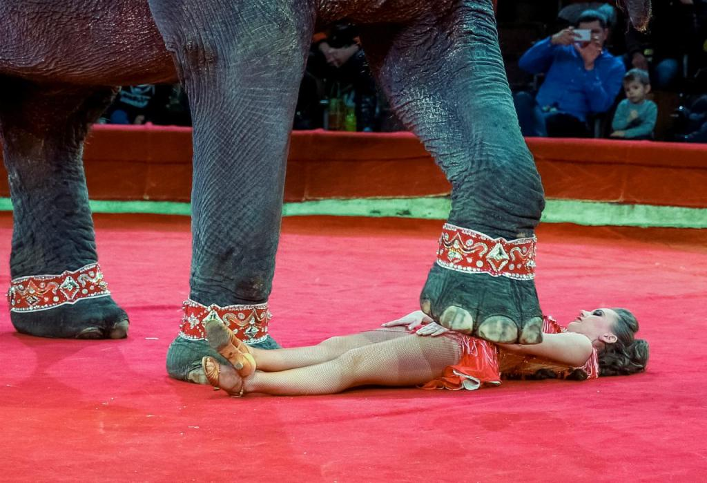 Circo (arquivo)