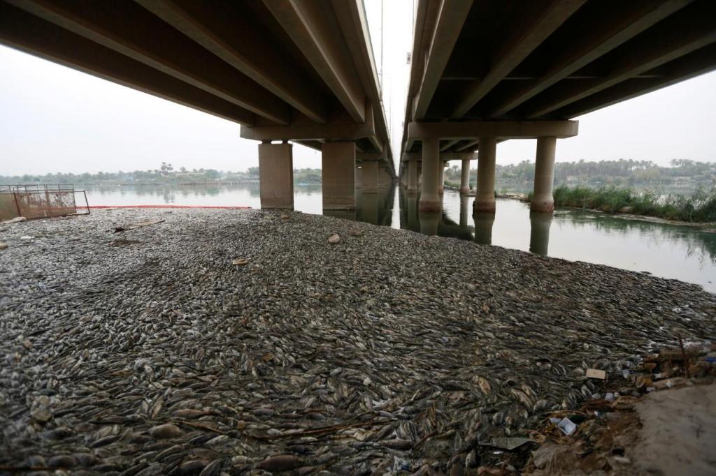 Peixes mortos debaixo de ponte