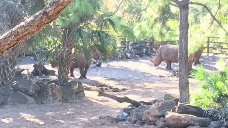Uma bebé de dois anos caiu na jaula de rinocerontes brancos, no jardim zoológico Brevard