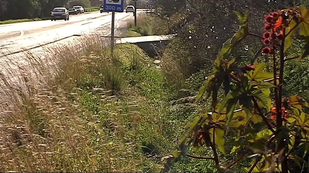 Jovem atropelada e abandonada na berma da estada em Olhão