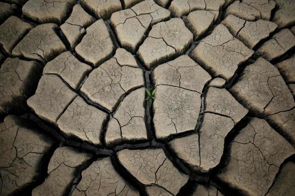 Um rebento no meio de um campo seco