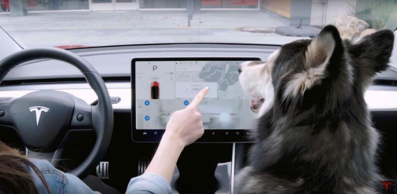 'Modo cão' da Tesla (reprodução YouTube)