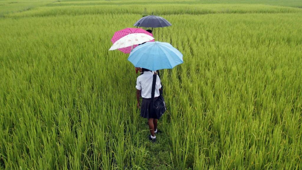 Zonas agrícolas na Índia