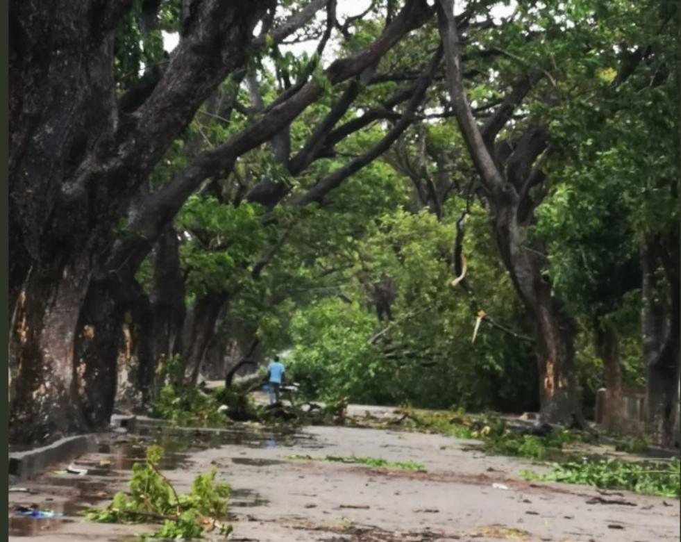 Ciclone IDAI derruba árvores