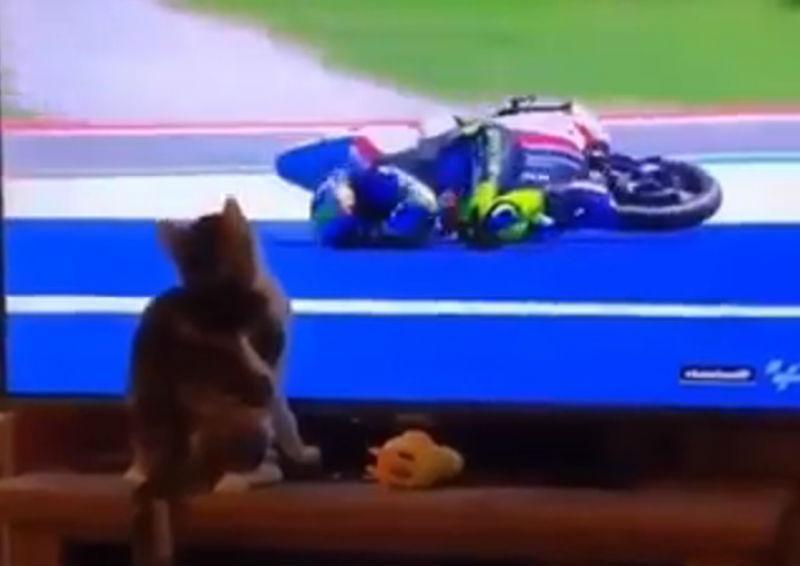 Gato é o 'culpado' do acidente (reprodução Facebook MotoGP)