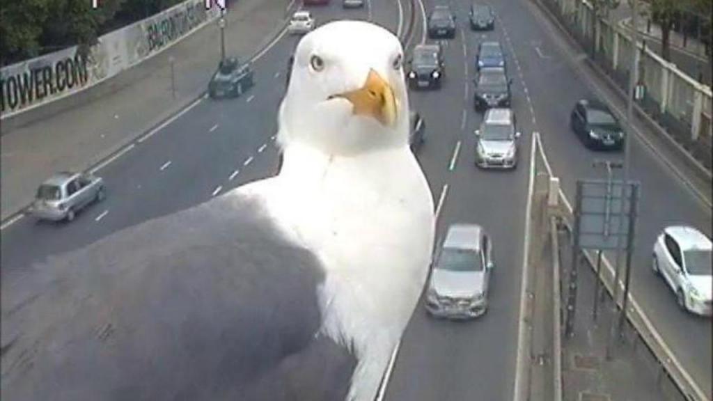 Photobomb de gaivotas em Londres