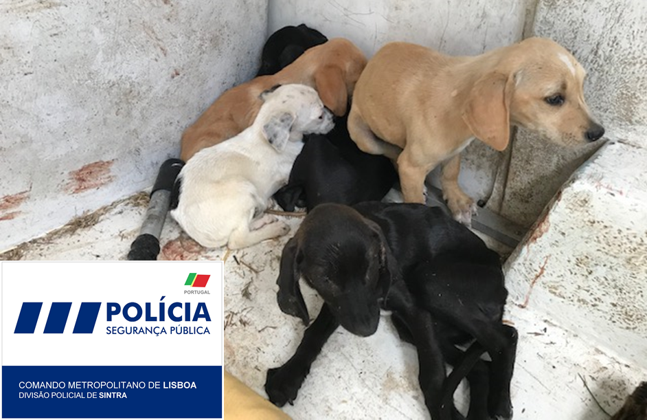 Cães resgatados no Cacém