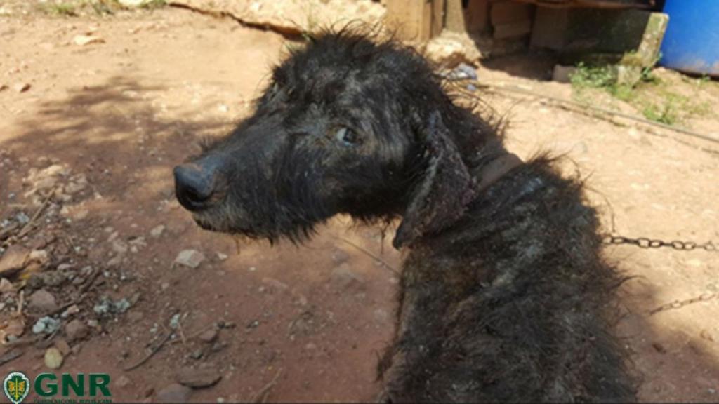 Cão resgatado em Coimbra