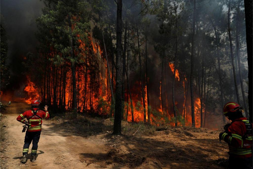 Incêndio começou em Vila de Rei e alastrou a Mação