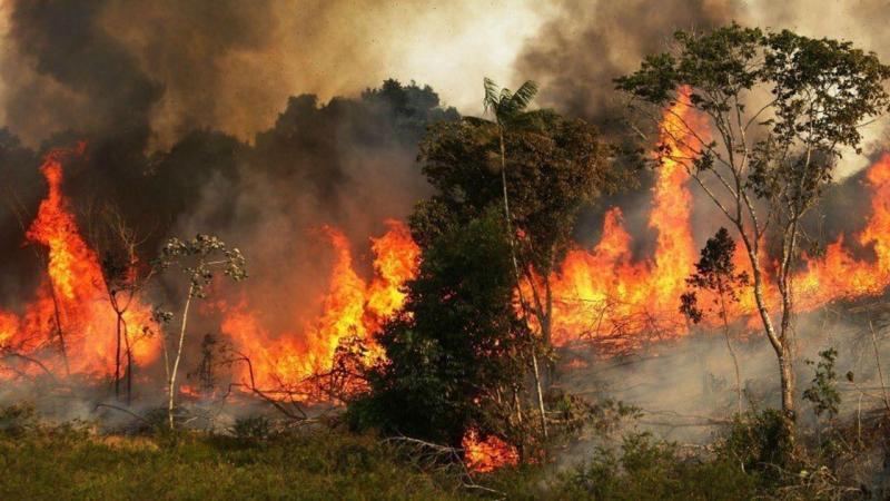 Incêndios na Amazónia
