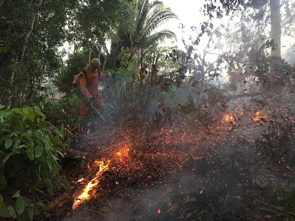 Amazónia está a arder