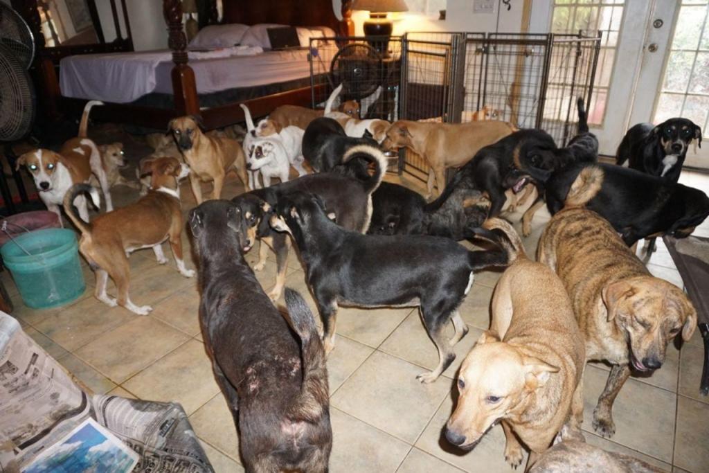 Cães resgatados nas Bahamas devido ao furacão Dorian