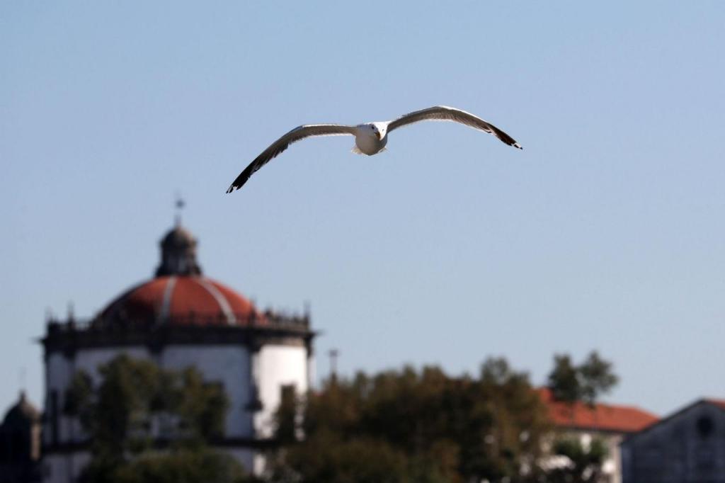 Águia expulsa gaivotas de hotel de luxo