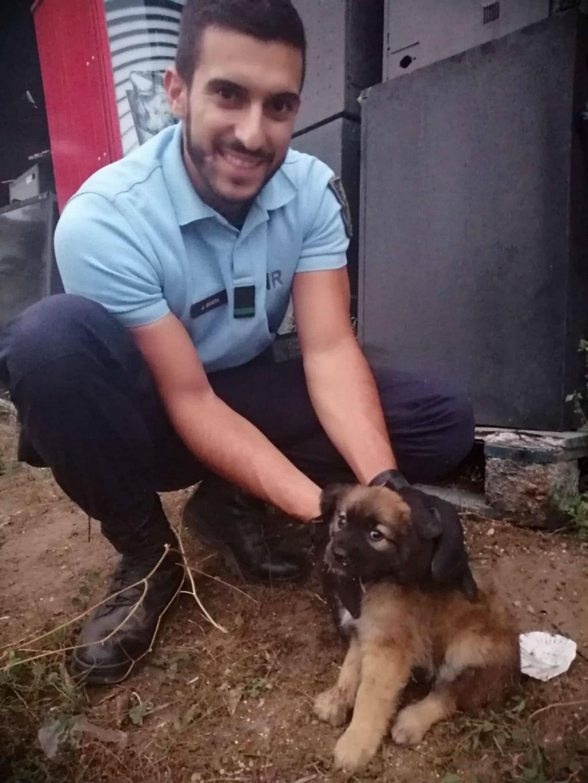 GNR resgata cão abandonado