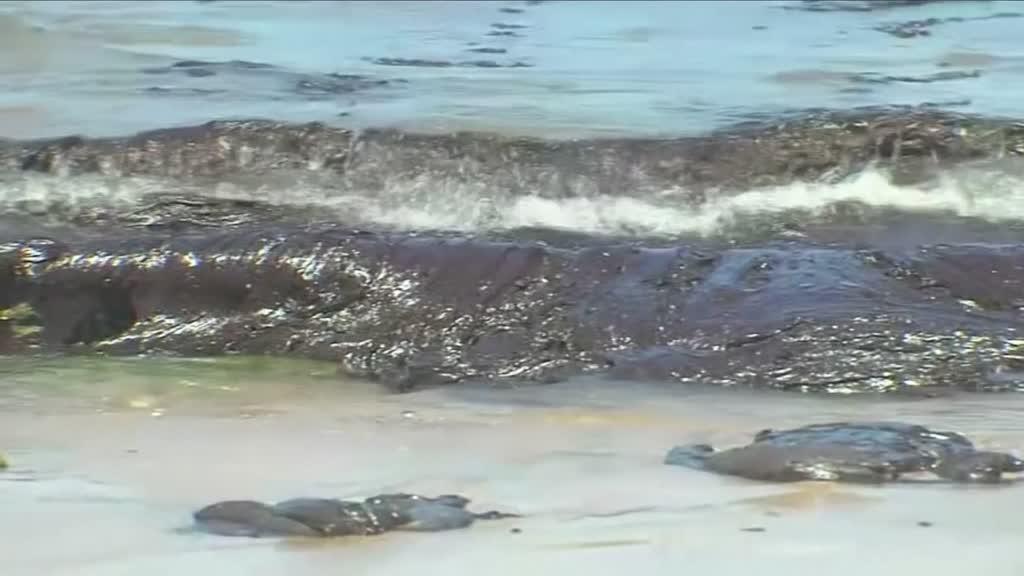 Estado de emergência na Bahia após derrame de petróleo no mar